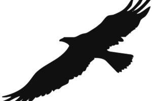 eagle symbol of enlightened individualist