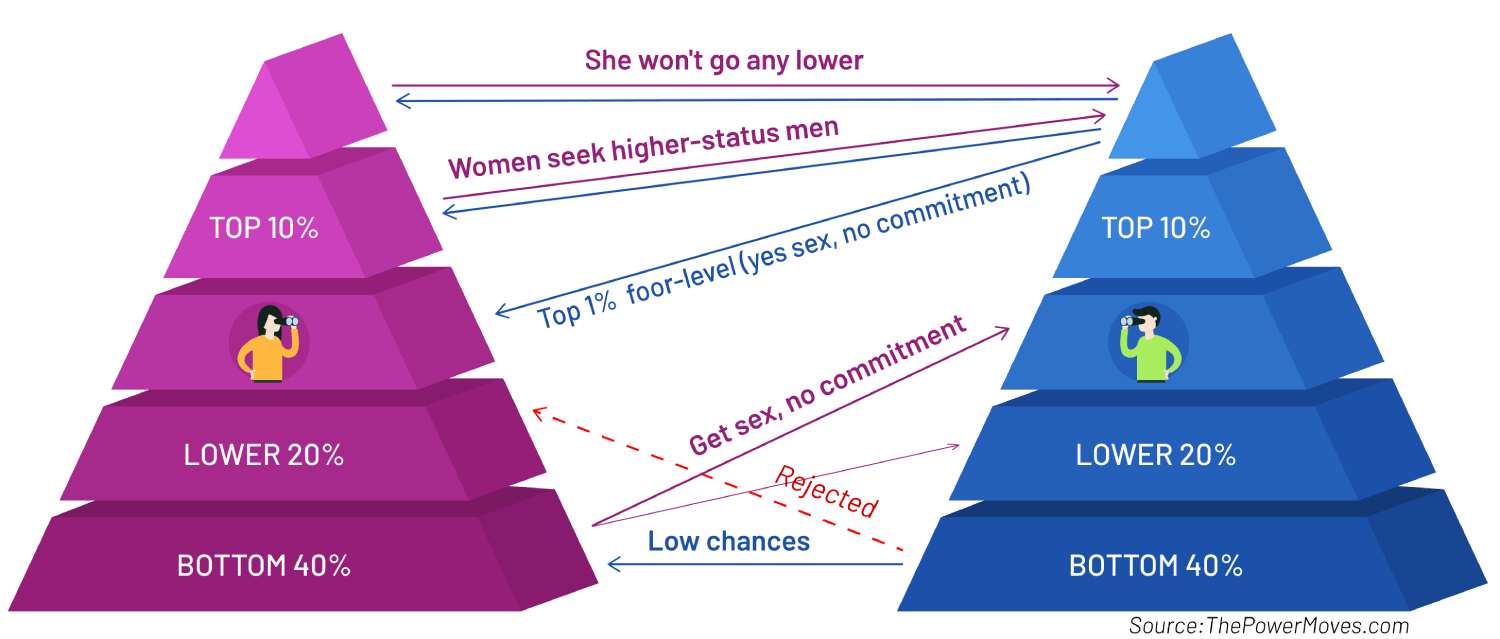 hypergamy pyramid in infographic