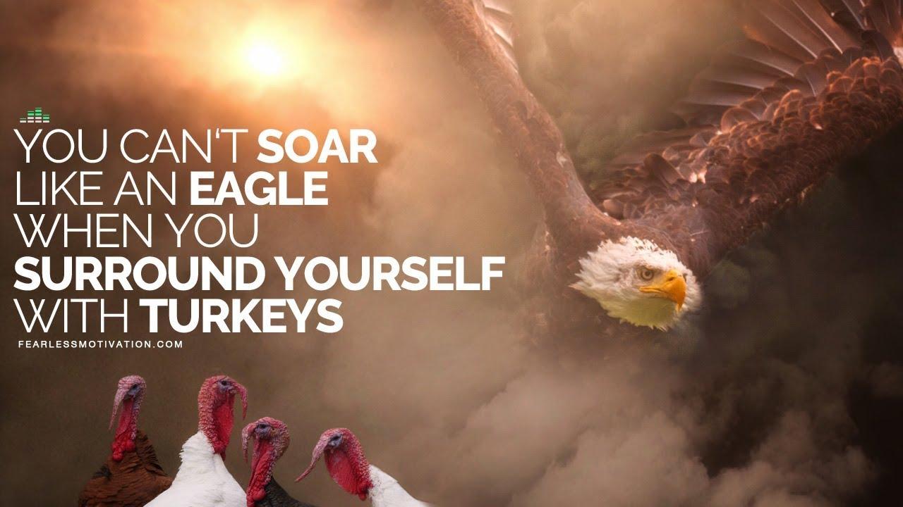 eagle and turkeys